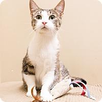 Adopt A Pet :: Yana - Chicago, IL