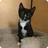 Adopt A Pet :: Stewart - Winchester, CA