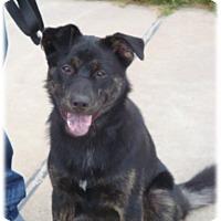 Adopt A Pet :: Wally Bear D3720 - Shakopee, MN