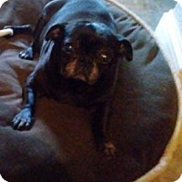 Adopt A Pet :: Mimosa - Austin, TX