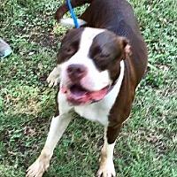 Adopt A Pet :: Mila - Denison, TX