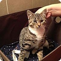 Adopt A Pet :: Penny - Halifax, NS