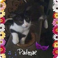 Adopt A Pet :: Padmae - Mobile, AL