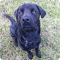 Adopt A Pet :: Thor - Cleveland, OH