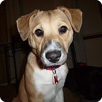 Adopt A Pet :: Aspen - Fenton, MI
