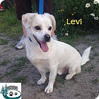 Adopt A Pet :: Levi - Adopted August 2016 - Huntsville, ON