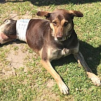 Adopt A Pet :: Job - Mary Esther, FL
