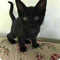 Adopt A Pet :: Duke - Orlando, FL