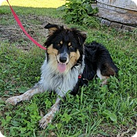 Adopt A Pet :: Bandit - Lisbon, OH