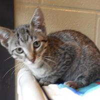 Adopt A Pet :: Pepper - Jackson, MI