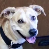 Adopt A Pet :: Nala - Oxford, WI