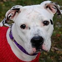 Adopt A Pet :: Hilda - Tyrone, PA
