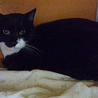 Adopt A Pet :: Aphrodite - Elyria, OH