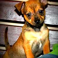 Adopt A Pet :: Stewie~adopted! - Southbury, CT