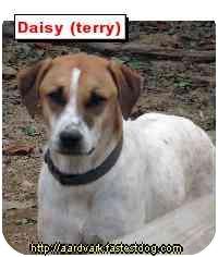 Pointer/Hound (Unknown Type) Mix Dog for adoption in Talking Rock, Georgia - Daisy