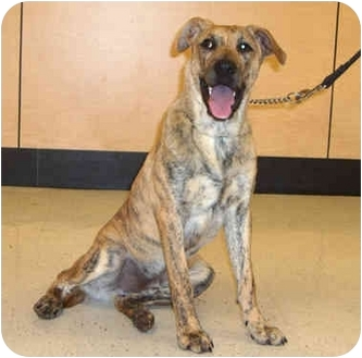 Hound (Unknown Type) Mix Dog for adoption in McCormick, South Carolina - Amos