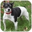 Photo 3 - Rat Terrier Mix Dog for adoption in PRINCETON, New Jersey - Shane