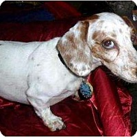 Adopt A Pet :: Dubby - Vale, OR