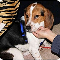 Adopt A Pet :: Jackie - Portland, OR