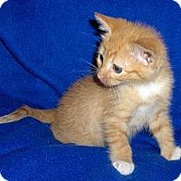 Adopt A Pet :: TJ - Richmond, VA