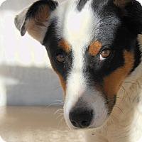 Adopt A Pet :: Trixie - Denver, CO