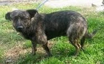 Feist Mix Dog for adoption in Prestonsburg, Kentucky - kendrick