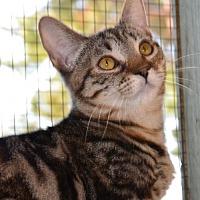 Adopt A Pet :: Kendra *AAA-Choo* - Glendale, AZ