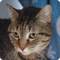 Adopt A Pet :: Rain - Martinsville, IN