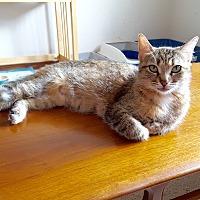 Adopt A Pet :: Tippy - Arlington/Ft Worth, TX