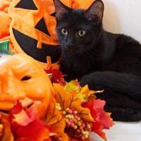 Adopt A Pet :: Trevor - Oviedo, FL