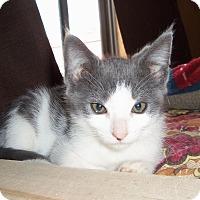 Adopt A Pet :: HENRICK - Medford, WI