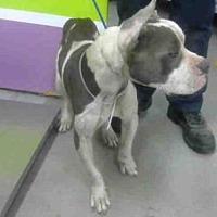 Adopt A Pet :: BUD - Houston, TX