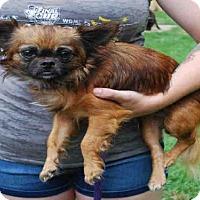 Adopt A Pet :: PEYTON - Louisville, KY