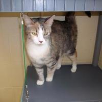 Adopt A Pet :: Lovey - Dothan, AL