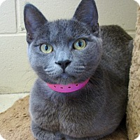 Adopt A Pet :: Blueberry - Chula Vista, CA