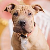 Adopt A Pet :: Monroe - Portland, OR