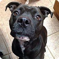 Adopt A Pet :: Gail - San Antonio, TX