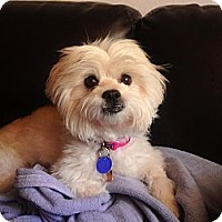 Adopt A Pet :: Samatha - Fairfax, VA