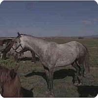 Adopt A Pet :: Eve - Pueblo, CO
