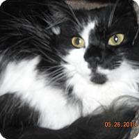 Adopt A Pet :: Naomi - Riverside, RI