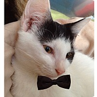 Adopt A Pet :: Trinity - Wildwood, FL