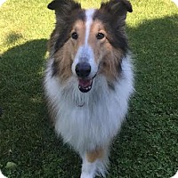 Adopt A Pet :: Lady - Chantilly, VA