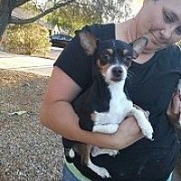Adopt A Pet :: Benny - Mesa, AZ