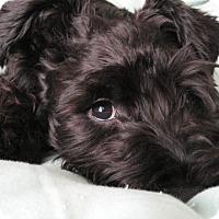 Adopt A Pet :: Kyra - El Cajon, CA