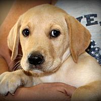 Adopt A Pet :: Murphy~adopted! - Southbury, CT