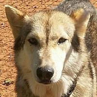 Adopt A Pet :: Nickademus - Guthrie, OK