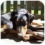 Photo 2 - Doberman Pinscher Dog for adoption in New Richmond, Ohio - Nyah--adopted!