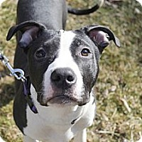 Adopt A Pet :: Cappuccino - Reisterstown, MD