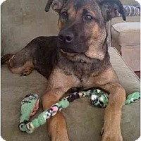 Adopt A Pet :: Beatrice - Reisterstown, MD
