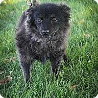Adopt A Pet :: LadyBug - Broomfield, CO
